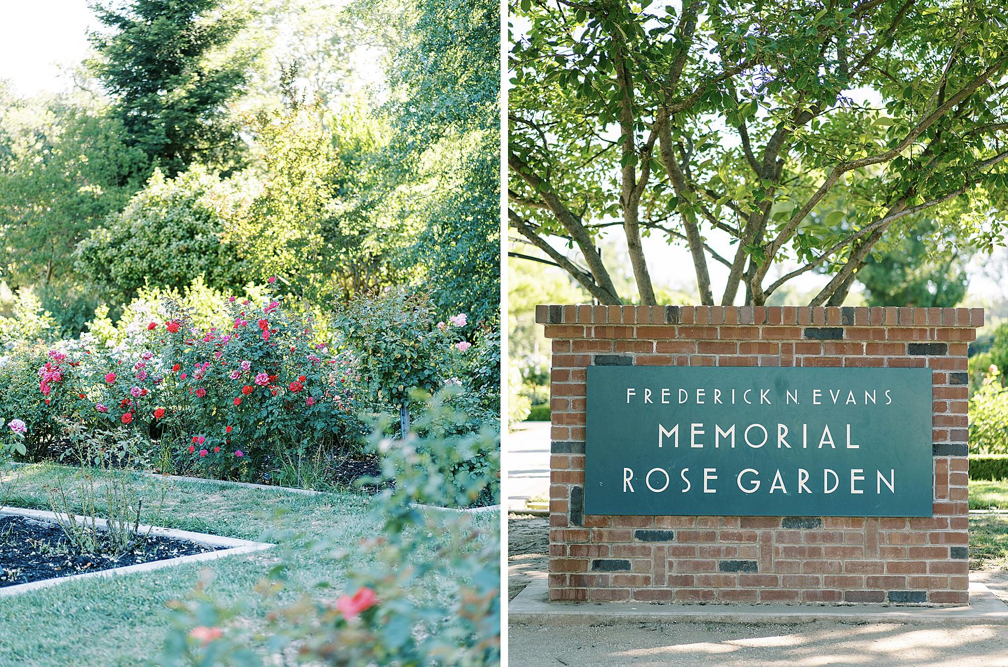Sacramento Rose Garden Engagement